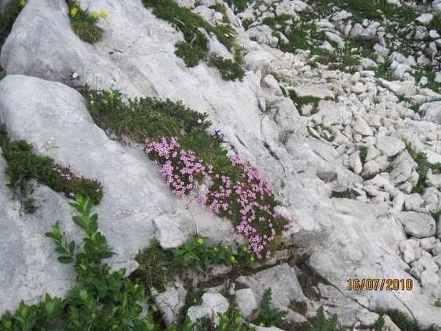 triglav-16-7-2010-056